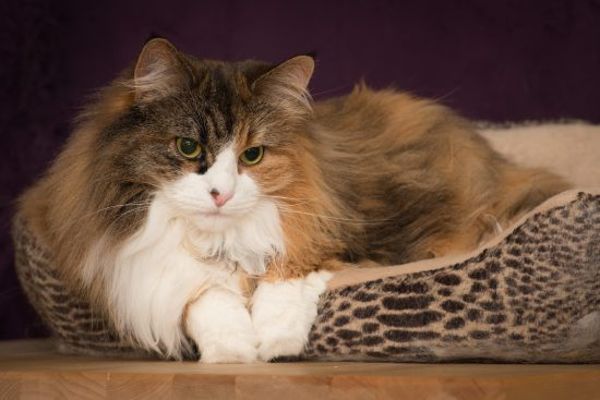 Ivy Resting In Her Cat Bed